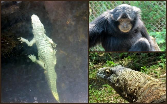 Louisville Zoo #2