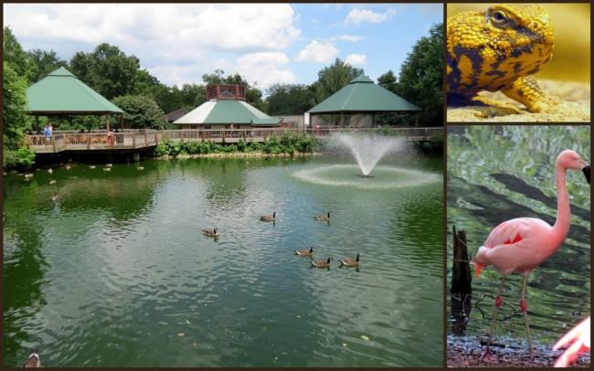 Louisville Zoo #3