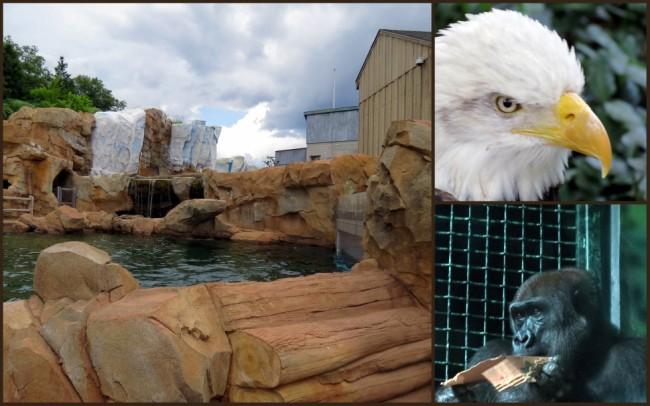 Louisville Zoo #5