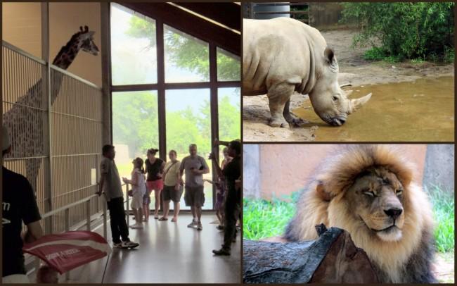 Louisville Zoo #6