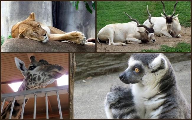 Louisville Zoo #7