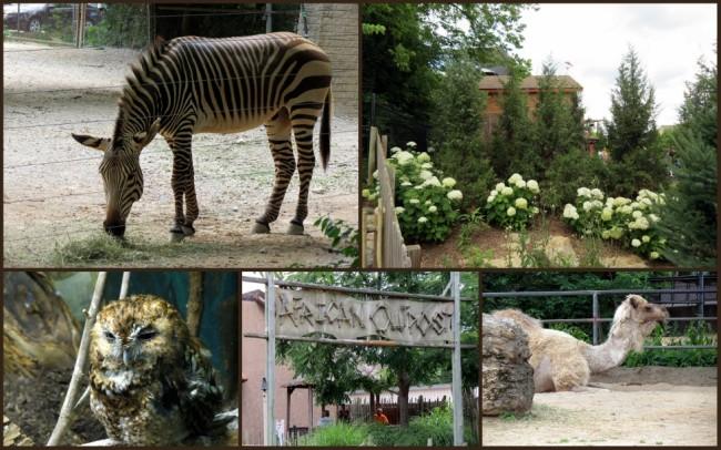 Louisville Zoo #8