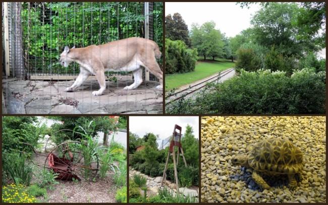 Louisville Zoo #9