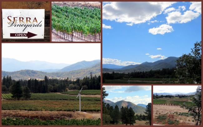 Serra Vineyard #2
